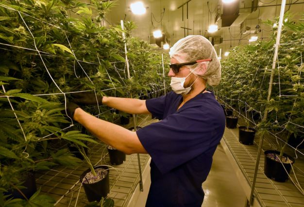 Advocates and Critics Reflect on Legal Pot Ahead of 420