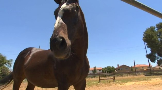 Inland Empire Woman Helps Rehab Injured and Neglected Horses