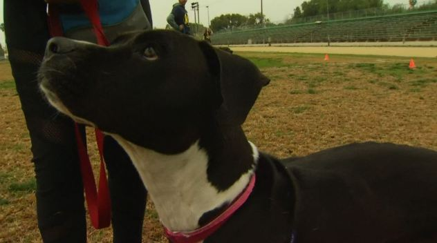 Program Teaches Students to Train Dogs for School Credit