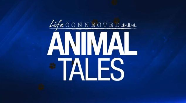 Life Connected: Animal Tales