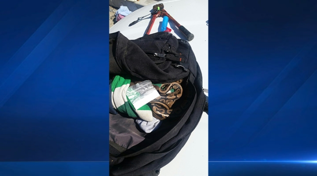 Man Arrested Allegedly Carrying Meth, Python in Bag