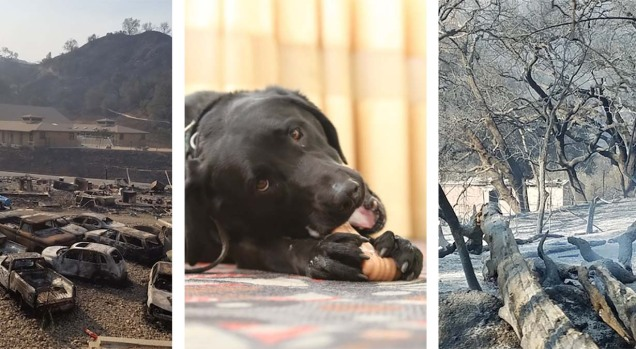 [LA GALLERY] Thomas Fire Tears Through Simulated Disaster Zone Used to Train Search Dogs