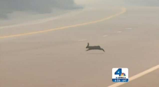 [LA] Wildlife Relocates, Potentially With Residents, After Springs Fire