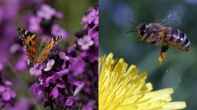 Hopland Sweet: Bees, Butterflies, and Wine