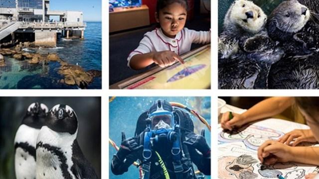 World Ocean Day in Monterey