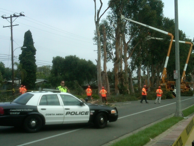 Workers Remove Trees After Deadly Accident