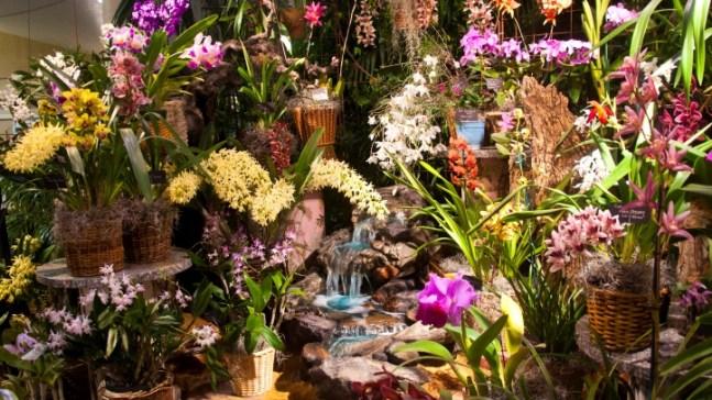 Orchid Fair Soon to Bloom in Santa Barbara