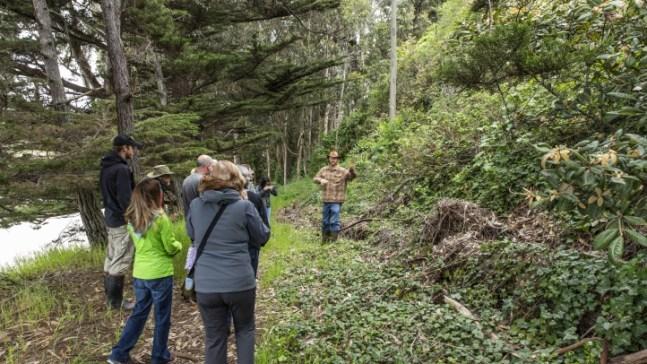 Take a Mushroom Walk in Mendocino County