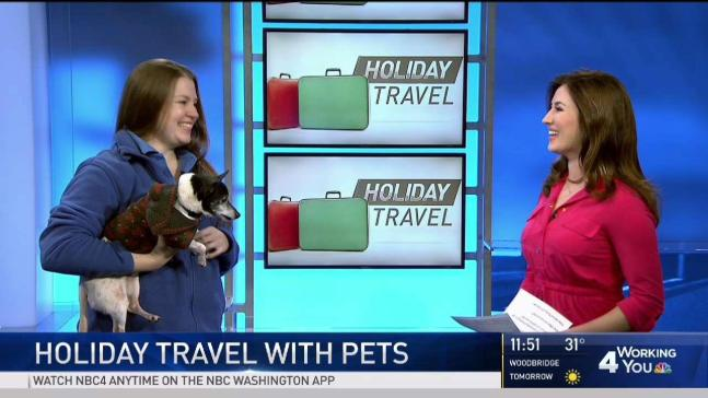 What to Know Before Traveling With Pets During the Holidays