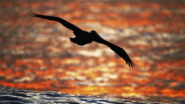 Birders Flock to San Diego for a Binoc-tacular Bash