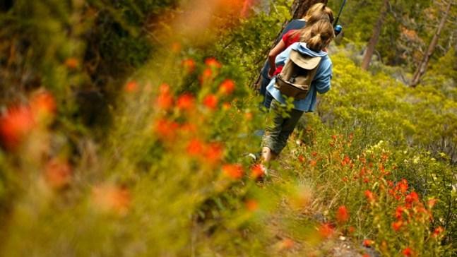 June Is Prime Wildflower Time at Lake Tahoe