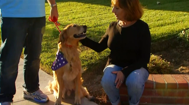 'Fergus' Training to Become Burn Center Therapy Dog