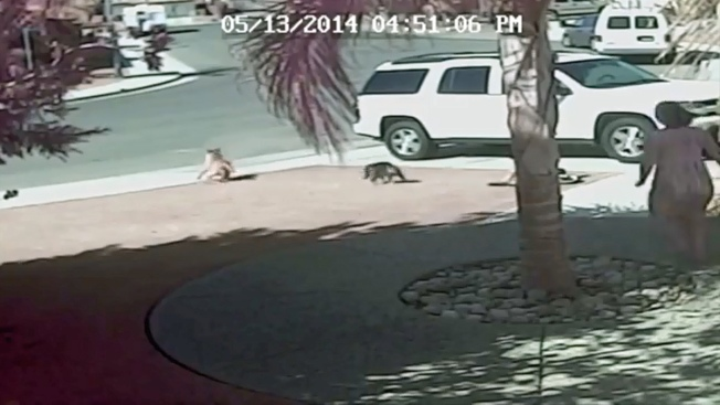 8-Month-Old Dog in Hero Cat Video Euthanized