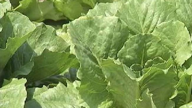 Green-tastic Gathering: Yuma Lettuce Days