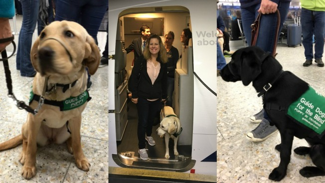 Puppies Undergo Training at Oakland International Airport in Effort to Help Blind Travelers