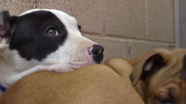 Trash Can Of Puppies Abandoned Outside Shelter Even Though It Was