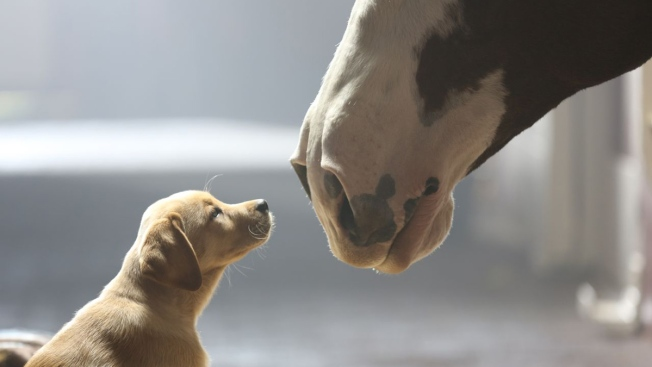 From Muppets to Puppies, Super Bowl Ads Get Cute