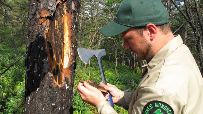 Beetle Invasion: Destructive Pine Beetle Appears in Northeast States