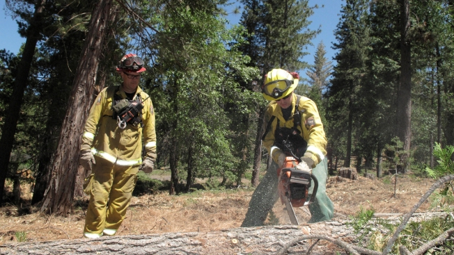 Drought Kills 66 Million Trees in California's Sierra, Raising Wildfire Fears