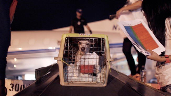 More Than 200 Doomed Puerto Rico Dogs Saved by Airlift to US