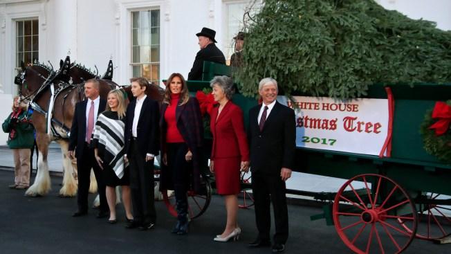 Melania Trump Takes Custody of White House Christmas Tree