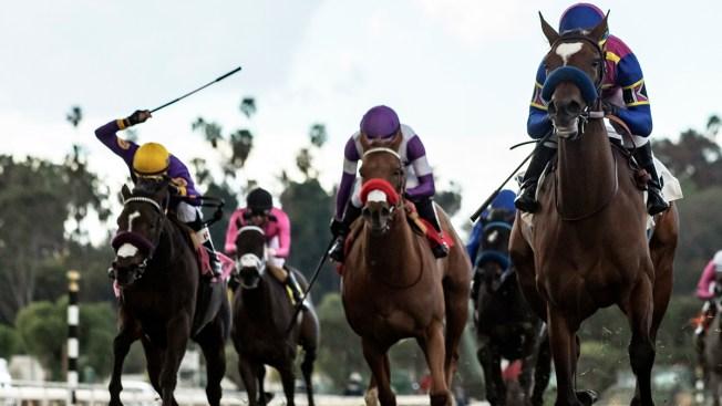 Santa Anita Race Track Concerns 19 Horses Die In 2 Months
