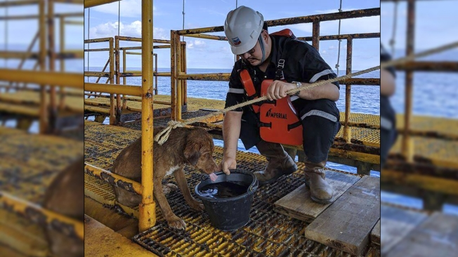 Swimming Dog Rescued Over 100 Miles From Land on Thai Oil Rig