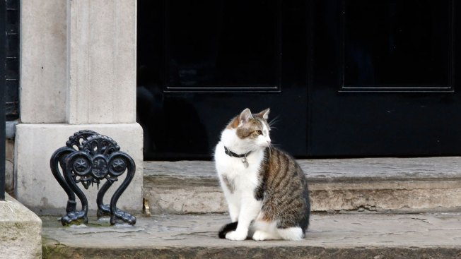 Britain Gets New PM but Larry the Downing Street Cat Stays