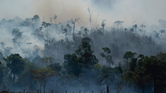 LA Councilmen Call on City to Boycott Brazilian Products over Amazon Wildfires
