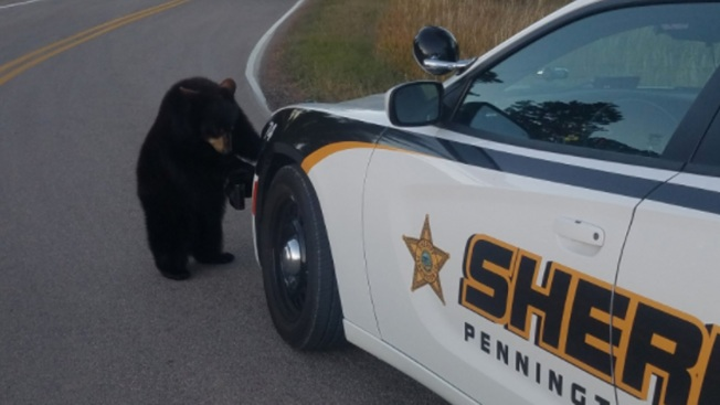 Curiosity Does in Bear Cubs After Escape From S. Dakota Wildlife Park