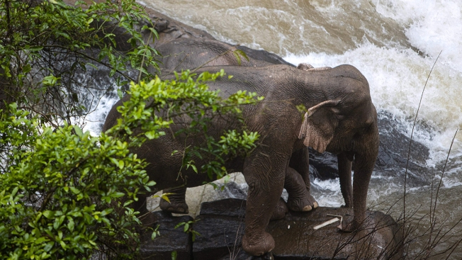 6 Elephants Die at Thai Park After Trying to Save Fallen Calf