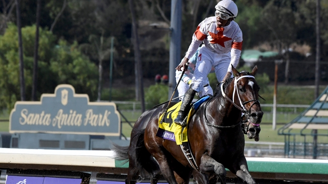 37th Horse Dies at Santa Anita Since December, Takes Shine Off Breeders' Cup
