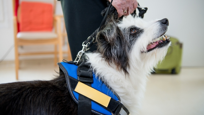 Therapy Dogs Bring Smiles to Somber Courthouse Proceedings in Maryland