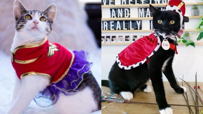 Dress as a Cat and Enjoy This Cat Café for Free