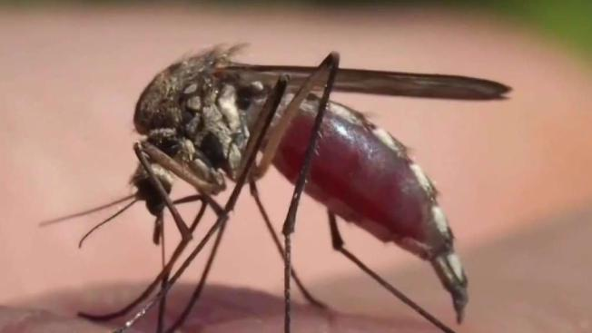 Mosquitos in San Fernando Valley Test Positive for West Nile Virus