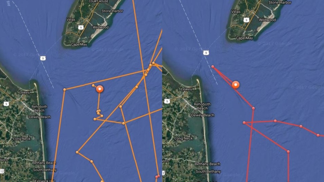 Great white shark Mary Lee returns to the Jersey Shore