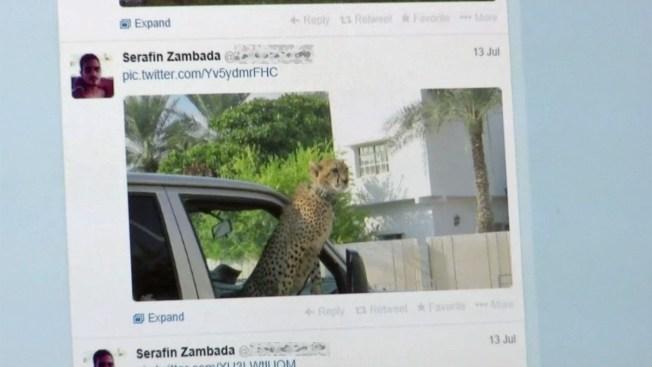 Social Media Posts Show Glimpse of Cartel Life