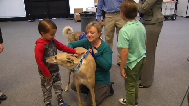 Oc Program Pairs Sex Assault Victims With Therapy Dogs