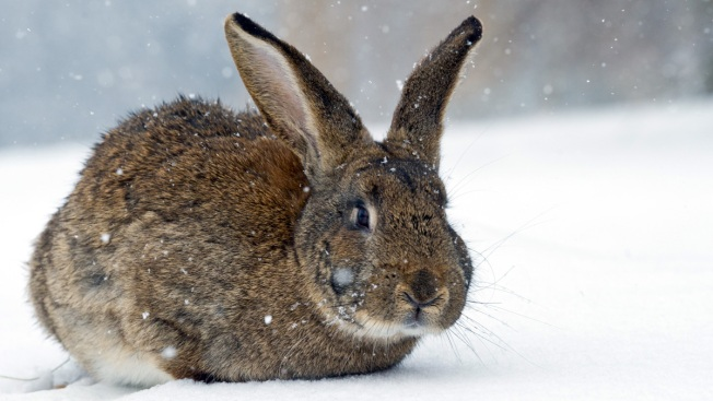 Cops Seize 74 Rabbits Left Outside During Blizzard: Report