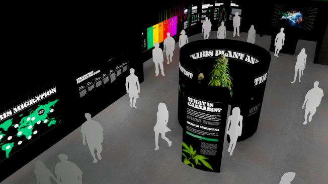 Museum Opening in Hollywood Plans to Combat Cannabis Stigma