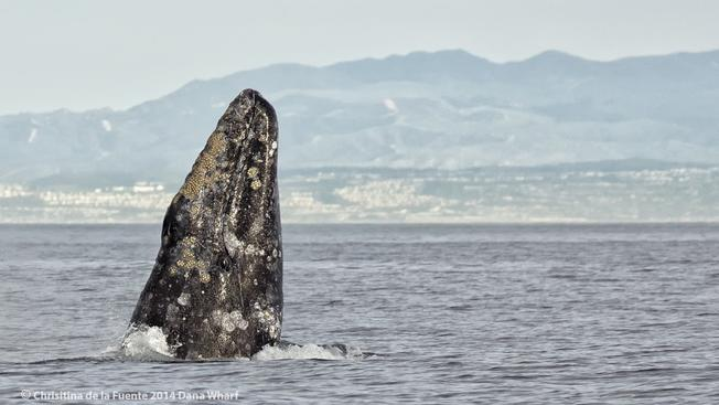 Weekend: Dana Point Festival of Whales