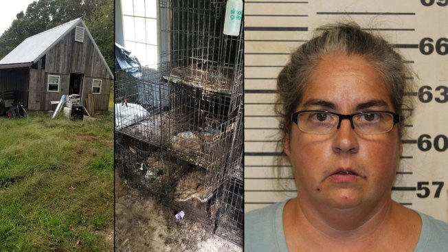Animal Rescue Operators Charged After 150 Dead Dogs Found