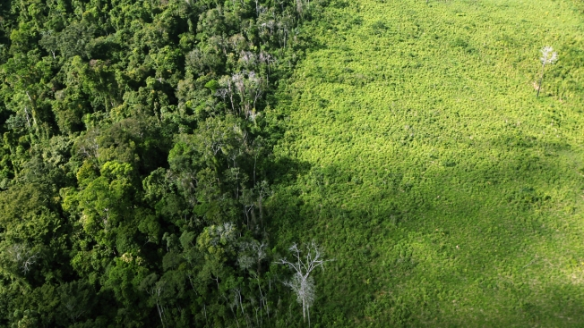 Religious, Indigenous Leaders Demand End to Tropical Rainforest Deforestation