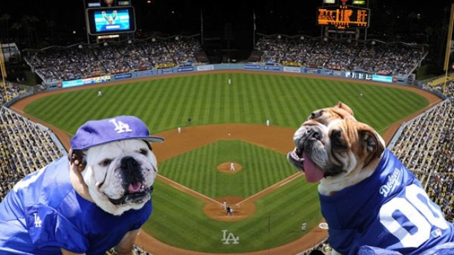 Every Dog Gets Its Dodger Day