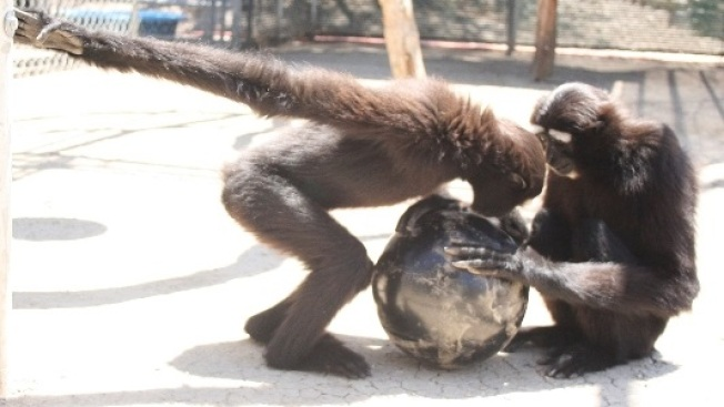 Sportsy Sweetness: Bowling for Gibbons