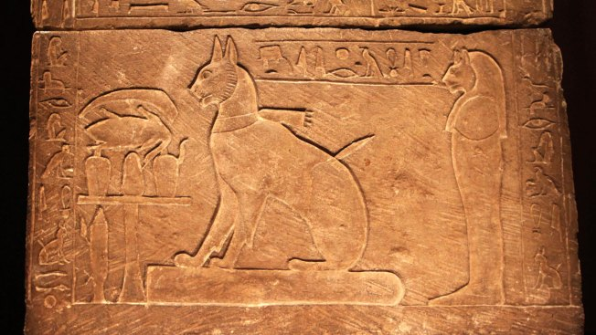 DNA Shows Early Spread of Cats in Human World