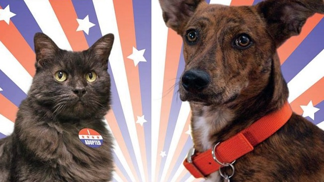 'Elect to Adopt' at Pasadena Humane
