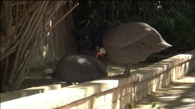 Third Cal Student Charged With Killing Exotic Bird