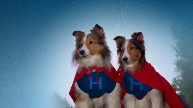 Nominations Now: Hero Dog Awards