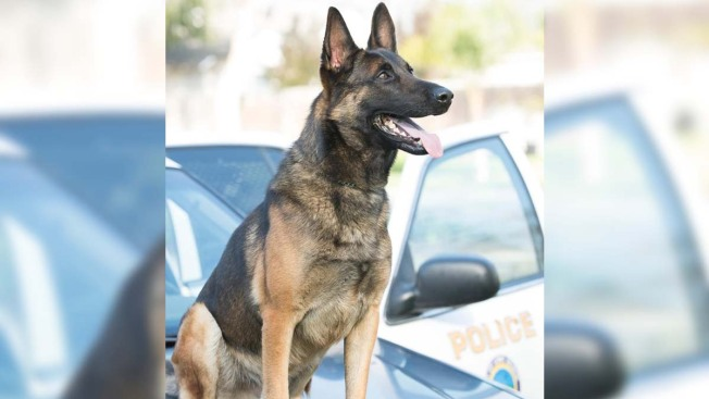Long Beach Police Continue to Investigate Heat-Related K-9